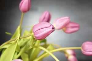 tulip-2141216_640